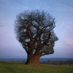 This picture has been reproduced by kind permission of stormthorgerson.com.
